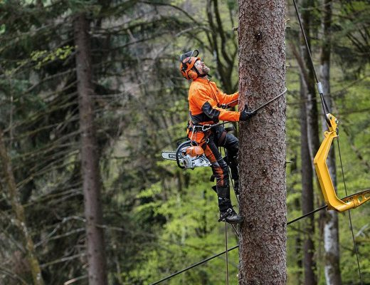 10 Signs Your Garden Requirements An Arborist